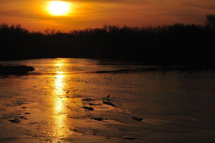 Aves en el Río Primero 1