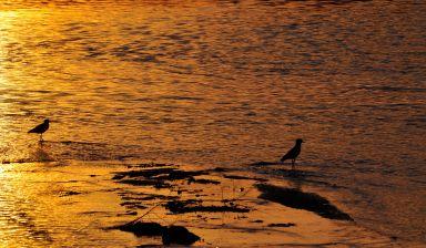 Aves en el Río Primero 2