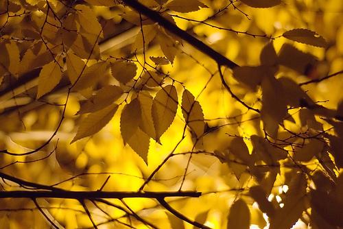 autumn's last stand. Foto de Idle Type