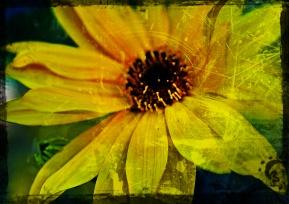 Flor tuneada
