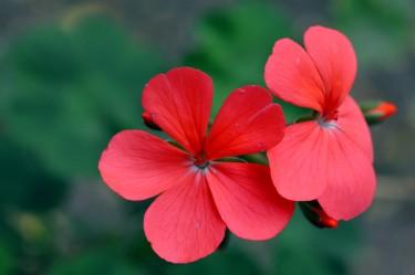 Flor roja -Foto de Guillermo Ciampagna-