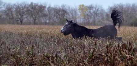 Fotos de caballos 2