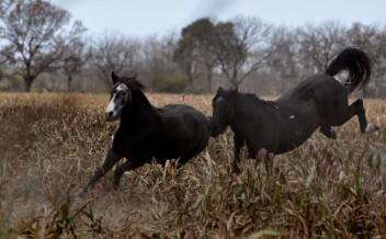 Foto de caballos 3
