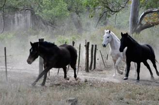 Foto de caballos 1