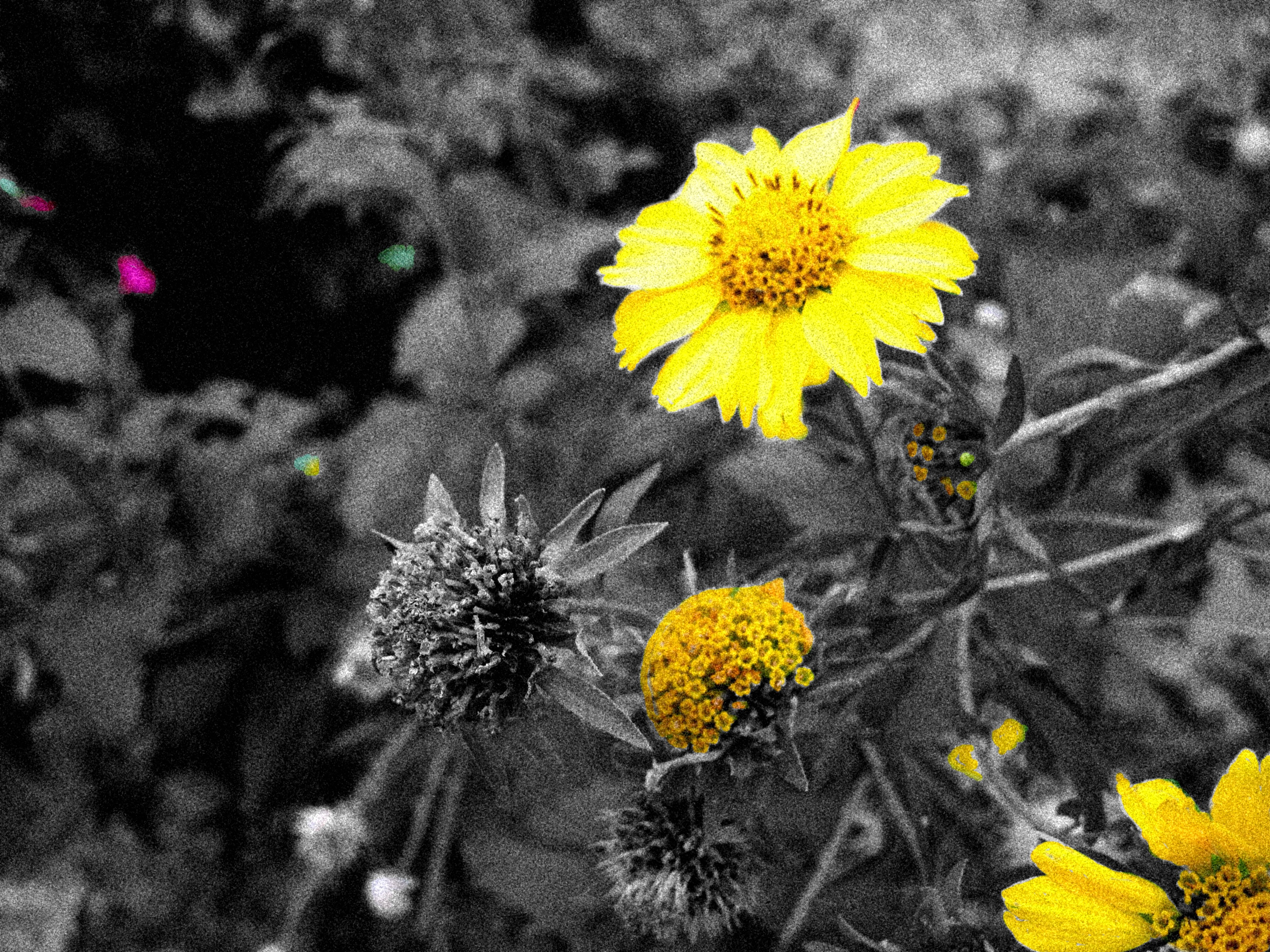 flores en la Falda