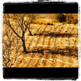 Arboles desde el Pucará de Tilcara