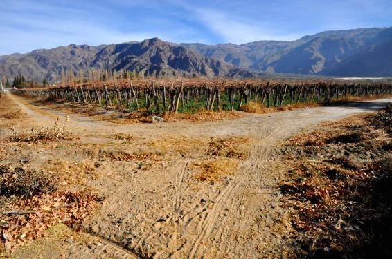 Los viñedos en invierno