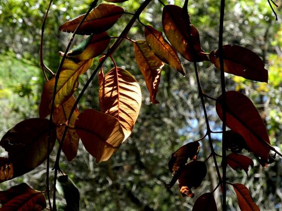 Luces en el bosque 5