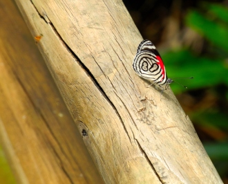 Foto cataratas del Iguazú 13 - Mariposa