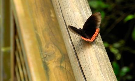 Foto cataratas del Iguazú 14 - Mariposa