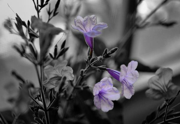 Fantasía en B/N y violáceos