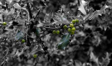 Fantasía en verde