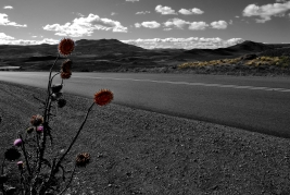 En ruta hacia Neuquén