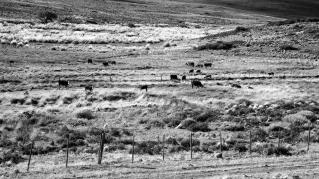 Rodeo patagónico, Departamento Catan Lil, Neuquén