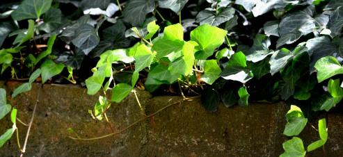 Luz en las hojas