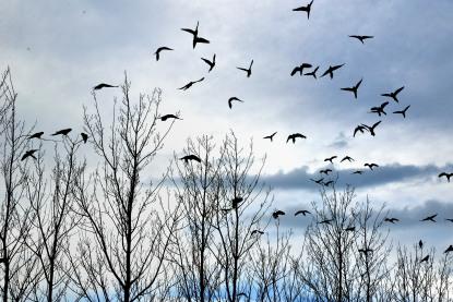 Bandada de pájaros espantada