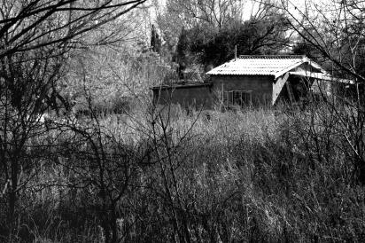 Casa entre yuyos