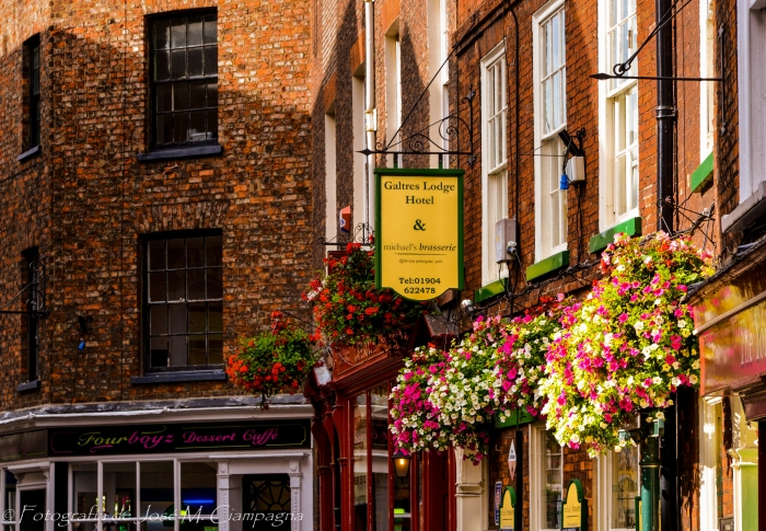 Flores colgantes en York