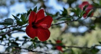 Flores de Chascomús