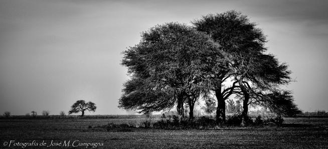 Paisaje de Campo en blanco y negro, Río Primero, Provincia de Córdoba